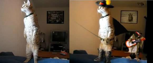 VIDEOFUN - O Gato de Botas!