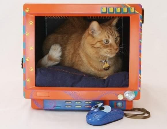 cama criativa para gatos 2