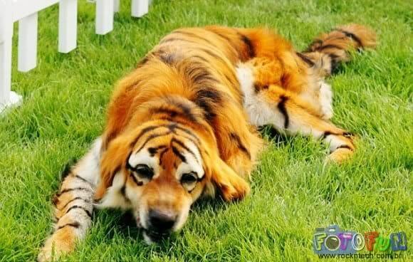 cao_tigre2