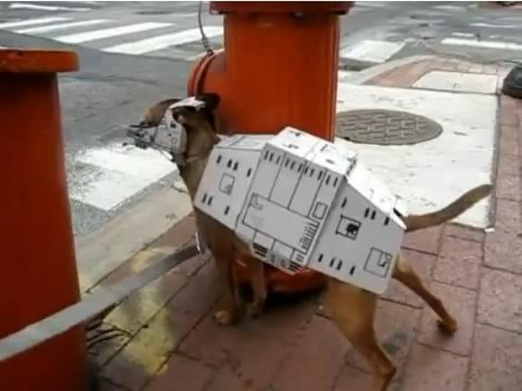 Um AT-AT pode sim ser um animal de estimação! (com vídeo)
