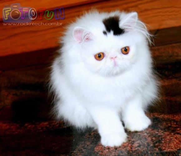 FOTOFUN - O Gato de Cartola.
