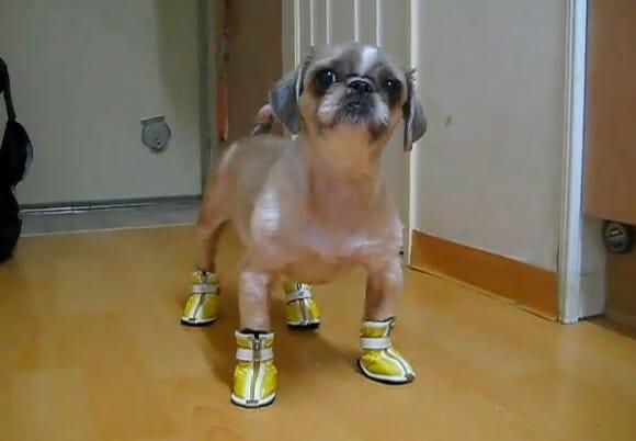 VIDEOFUN – Esses sapatos não lhe caem muito bem.