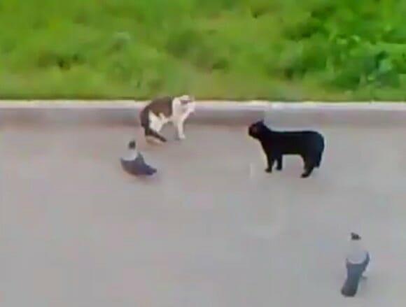 VIDEOFUN - The Ultimate Street Fighter com gatos. SHOW!!!