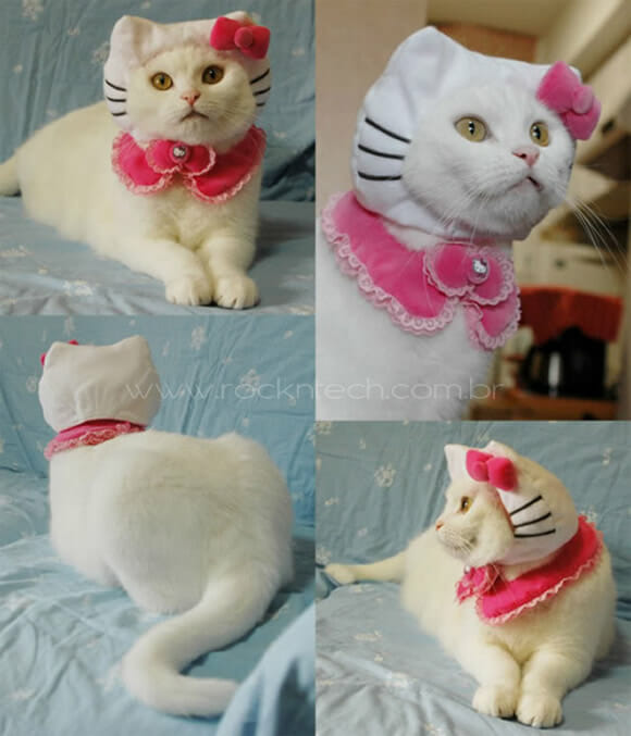 FOTOFUN - Hello Kitty na Vida Real.