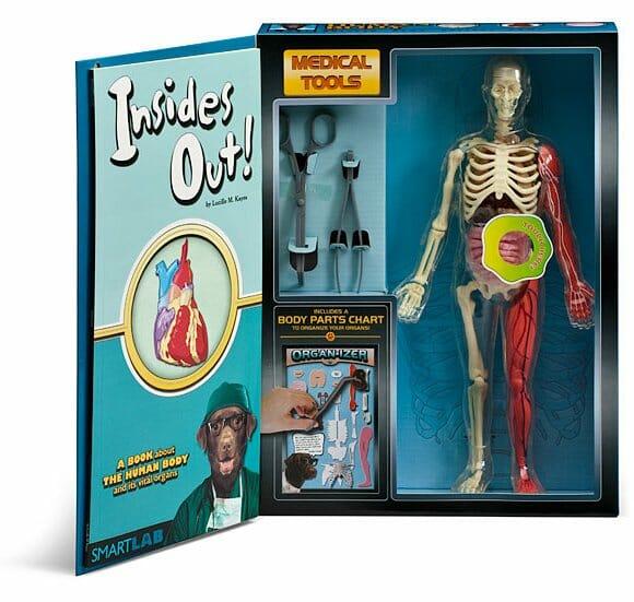 Um mini corpo humano cheio de detalhes para os médicos de amanhã.