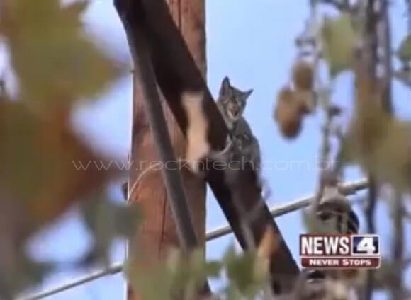 VIDEOFUN - E lá se foram as 6 vidas de um gato.