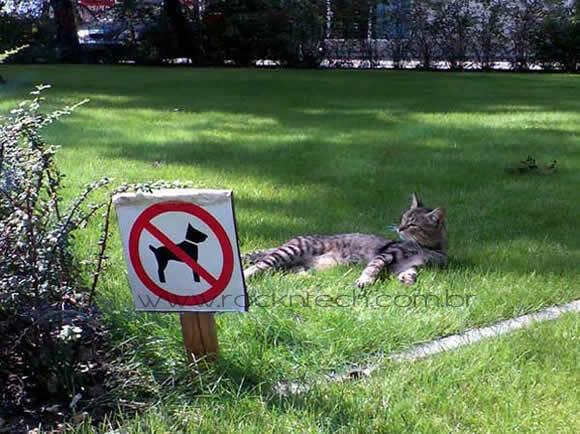 FOTOFUN - Proibida a entrada de animais.