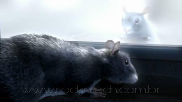 VIDEOFUN - A história de um ratinho.