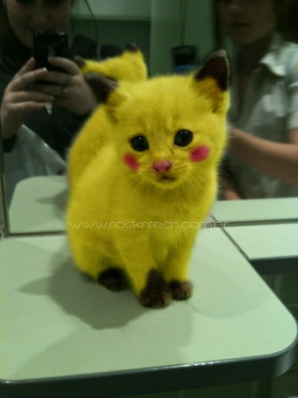 FOTOFUN – Pikacat!
