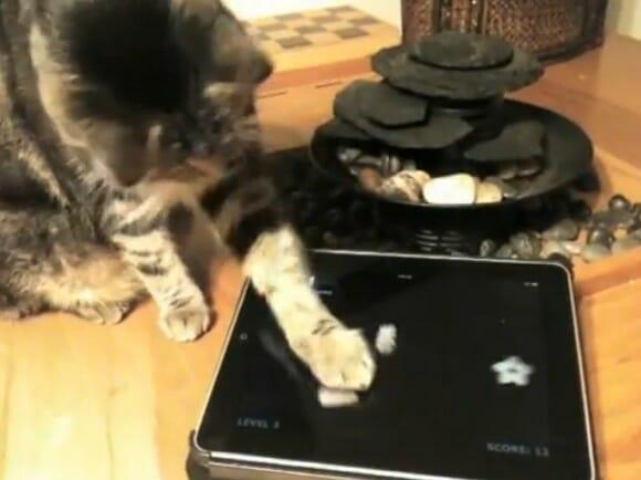 Games for Cats - Jogos criados especialmente para os gatos jogarem no iPad. (com vídeo)