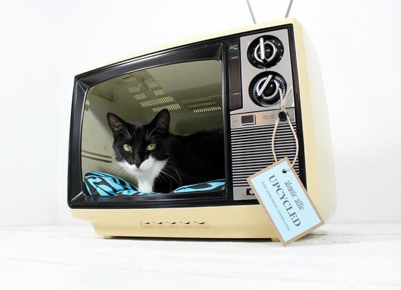 Resultado de imagem para tv gato