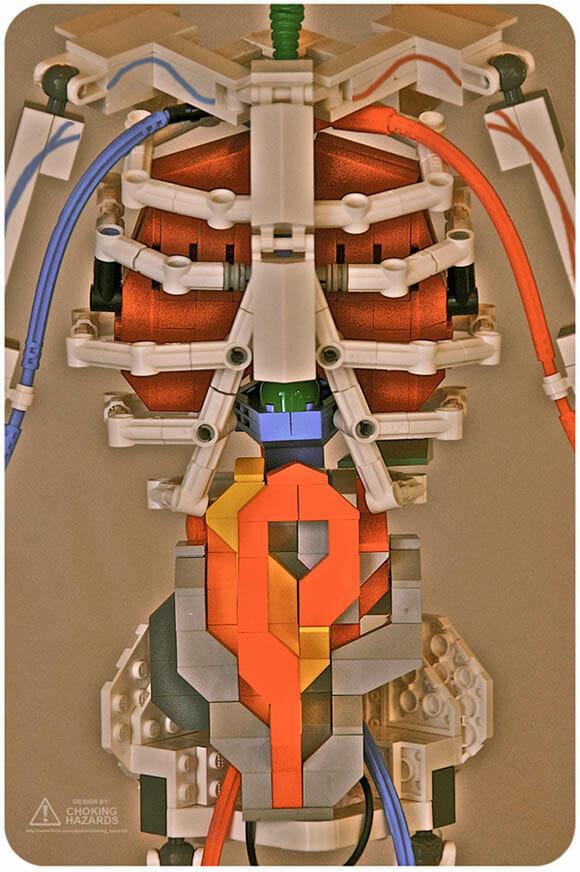 Aprender anatomia humana com um esqueleto humano feito de LEGO é muito mais divertido!