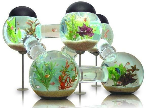Sonho de peixe: O incrível Labirinto de Aquários.