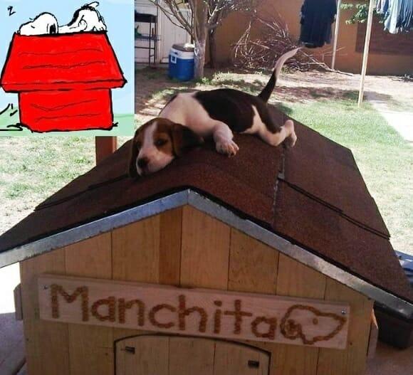FOTOFUN - Snoopy existe!!!