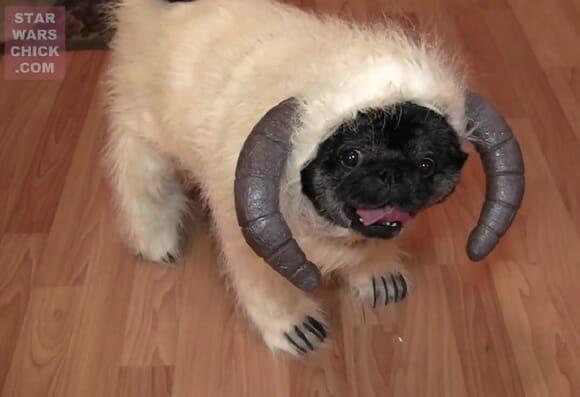 VIDEOFUN - Wampa Dog