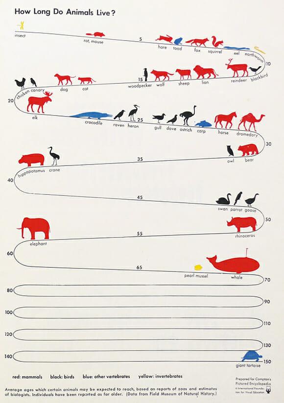 Quanto tempo vivem os animais