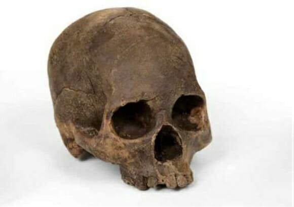 Crânio de chocolate feito a partir de um crânio real