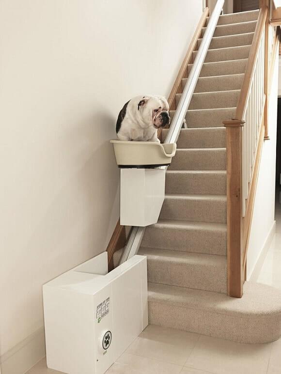 Elevador de escada desenvolvido para facilitar a vida de cães obesos