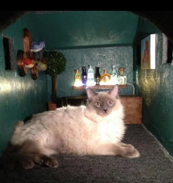 Casa de gato: Por fora um incrível AT-AT, por dentro lar doce lar