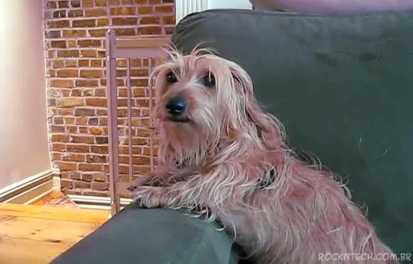 VIDEOFUN - Cães agora falam! OH NO!