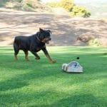 Go-Go Dog de controle remoto foge do seu cachorro enquanto você se diverte (vídeo)