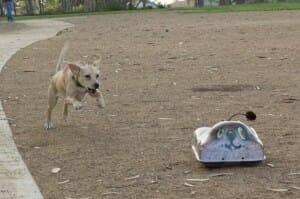 go-go-dog_4