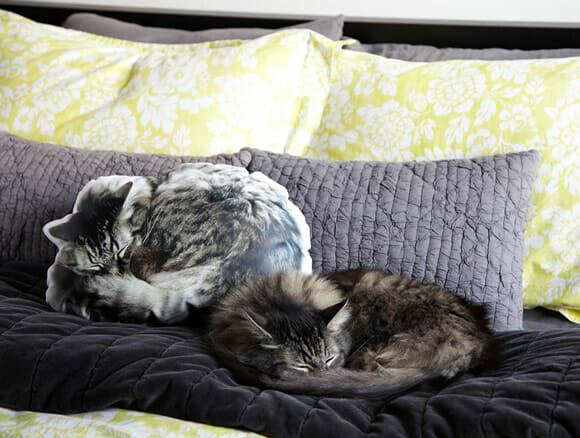 almofadas-animais