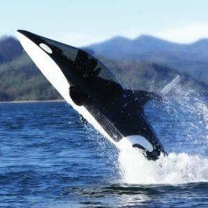 O incrível submarino com formato de Baleia Assassina (vídeo)