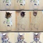 Quando o gato é sem vergonha e seu dono um desocupado
