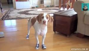 O que acontece quando você coloca uns tênis All Star no seu cachorro (vídeo)