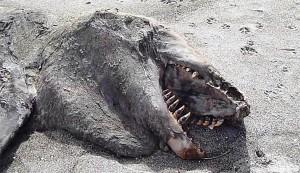 monstro-mar-nova-zelandia