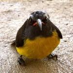 angry-birds-vida-real