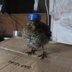 angry-birds-vida-real_10