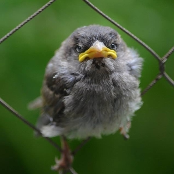 angry-birds-real