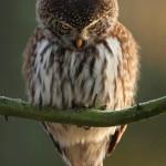 angry-birds-vida-real_13