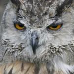 angry-birds-vida-real_15
