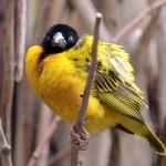 angry-birds-vida-real_16