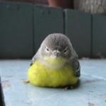 angry-birds-vida-real_2