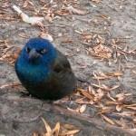 angry-birds-vida-real_3