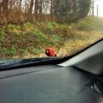 angry-birds-vida-real_8