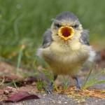angry-birds-vida-real_9