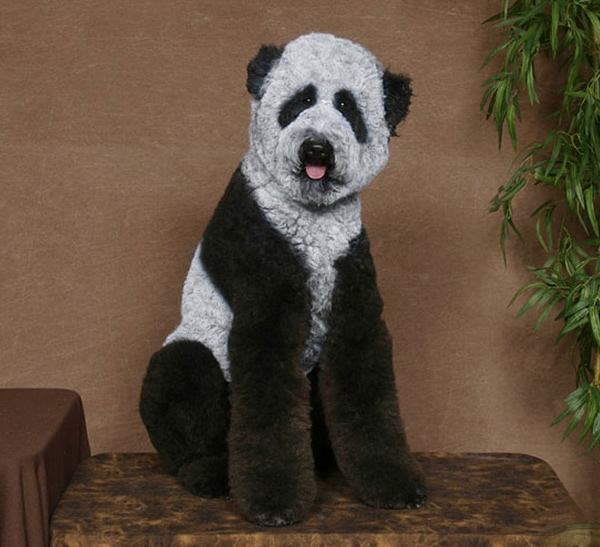 Cães estranhamente tosados e pintados para se parecer com personagens e outros animais
