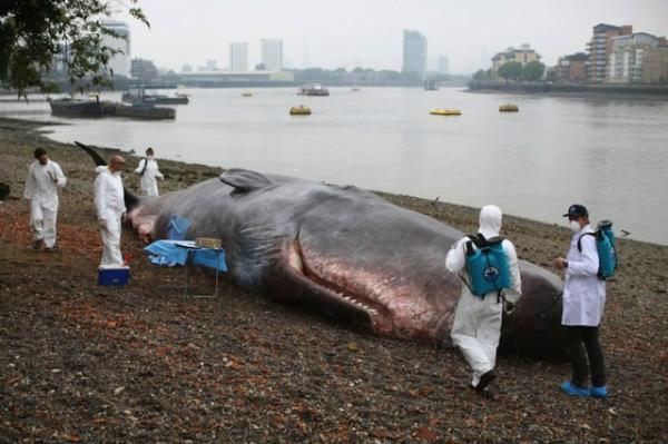 Escultura incrivelmente realista imita perfeitamente uma baleia encalhada