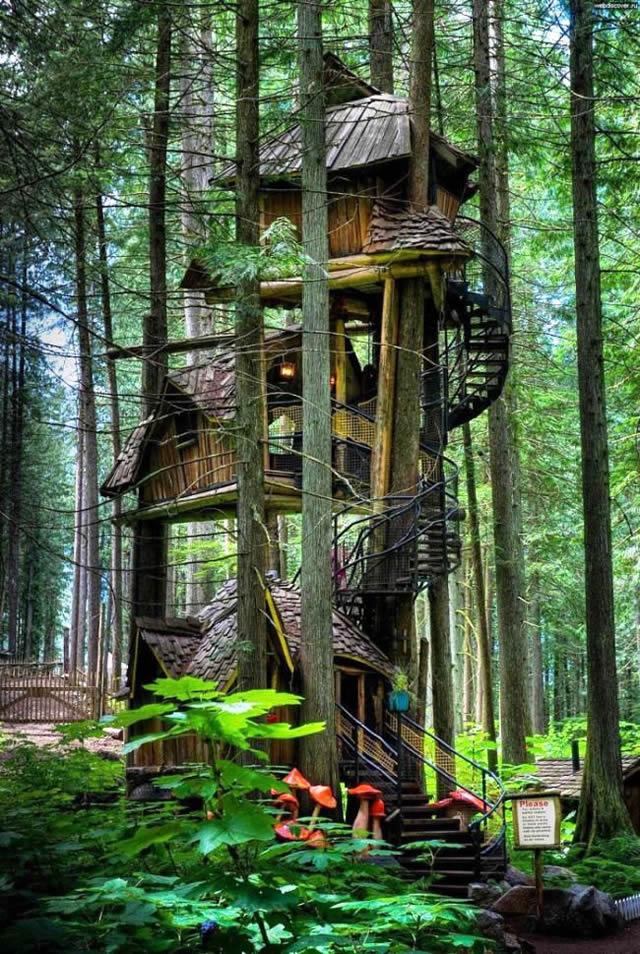 Casas na Árvore Fantásticas 1