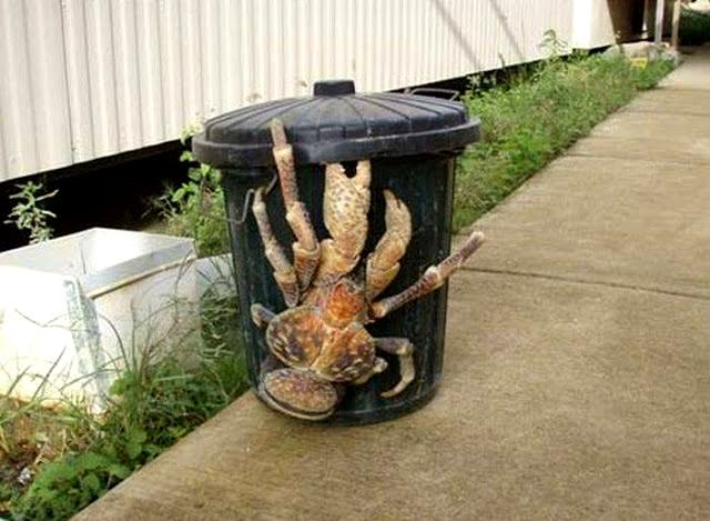 criaturas-mais-horripilantes