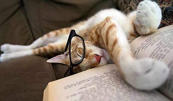 15 tipos de leitores representados por cães e gatos