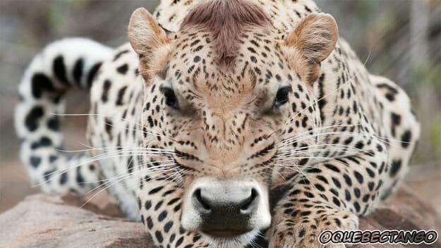"""29 """"Cruzamentos"""" intrigantes de animais que provavelmente nunca teriam acontecido"""