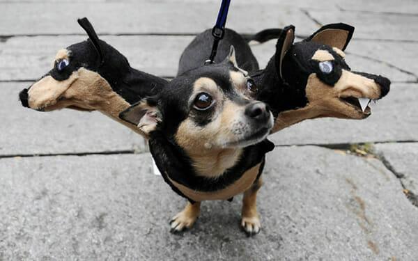 Top 20 fantasias engraçadas para animais