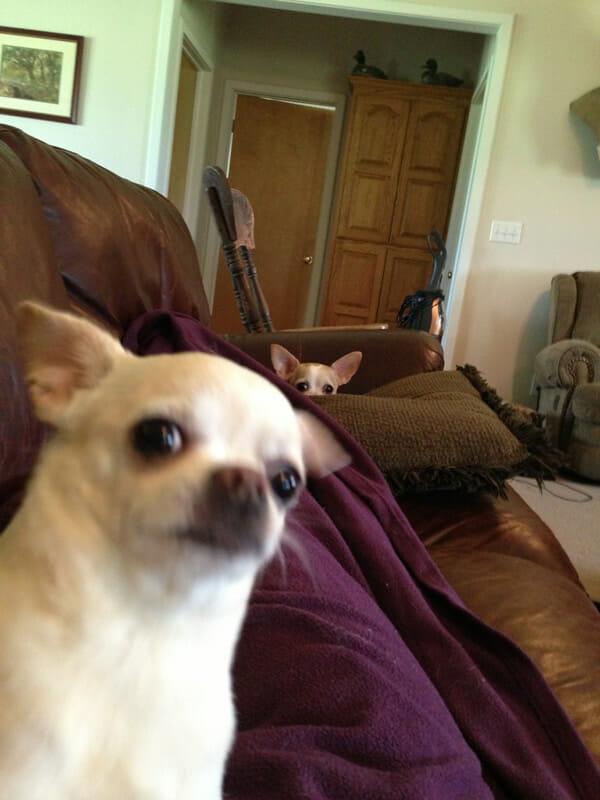 15 Imagens de cães que estragaram (ou não) a foto