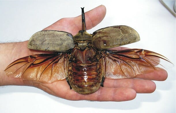 insetos-mais-aterrorizantes-natureza_12